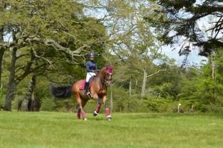 Dapple Equestrian